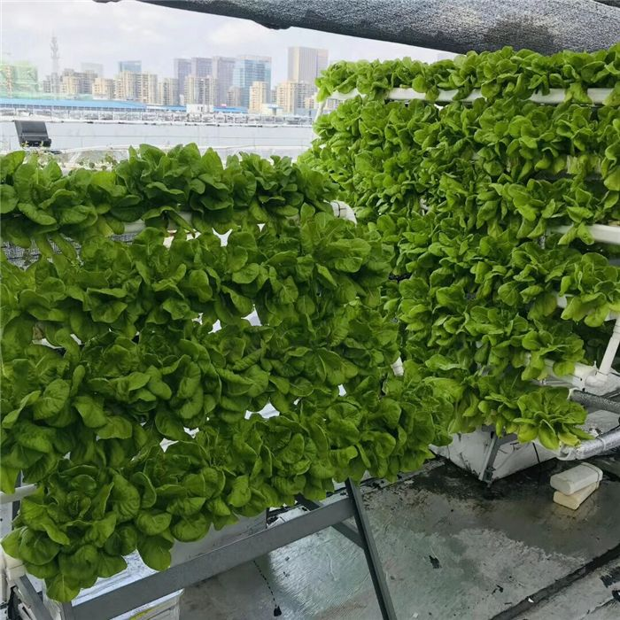 nft hydroponic channel