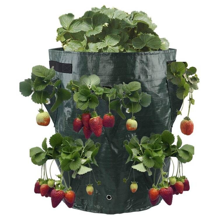 Plastic Strawberry Growing pots with 8 pockets