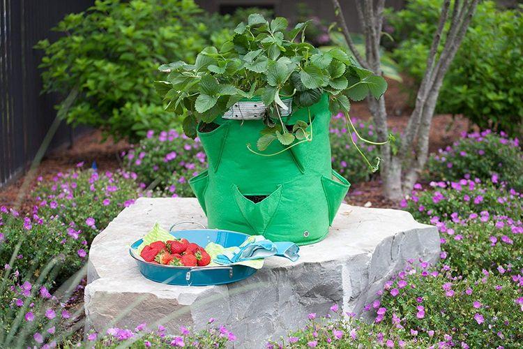 Felt Strawberry planting pots